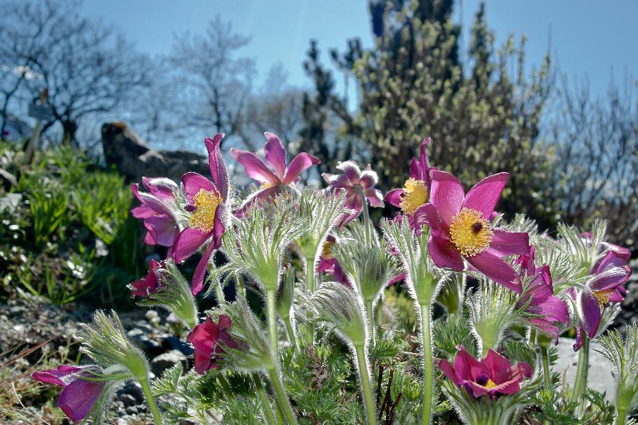 2011-04-07-botanischer-garten-17