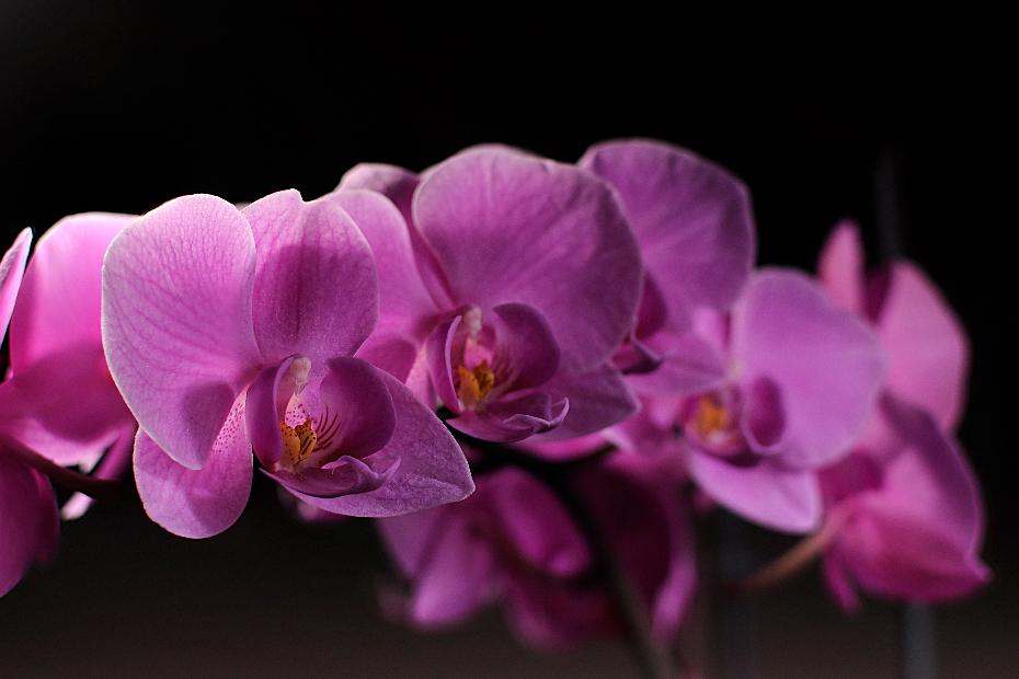 orchidee-03